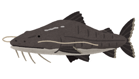 ピライーバのイラスト(魚)