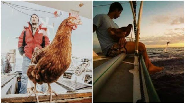 Soudee dan Monique sang ayam