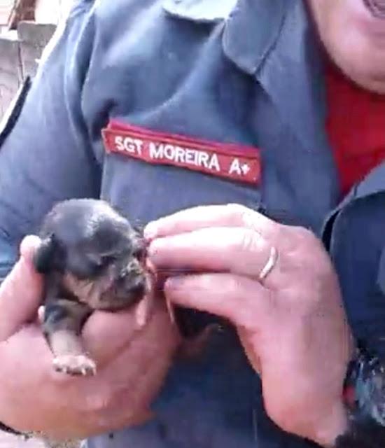 Filhote é resgatado por bombeiros em Alfenas (MG) (Foto: Corpo de Bombeiros)
