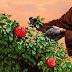 Daniel Saylor - Spring Rain [iTunes Plus AAC M4A]