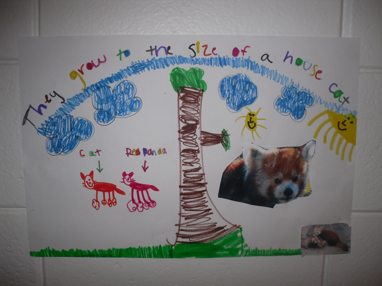 How Can We Save Endangered Animals Making Posters