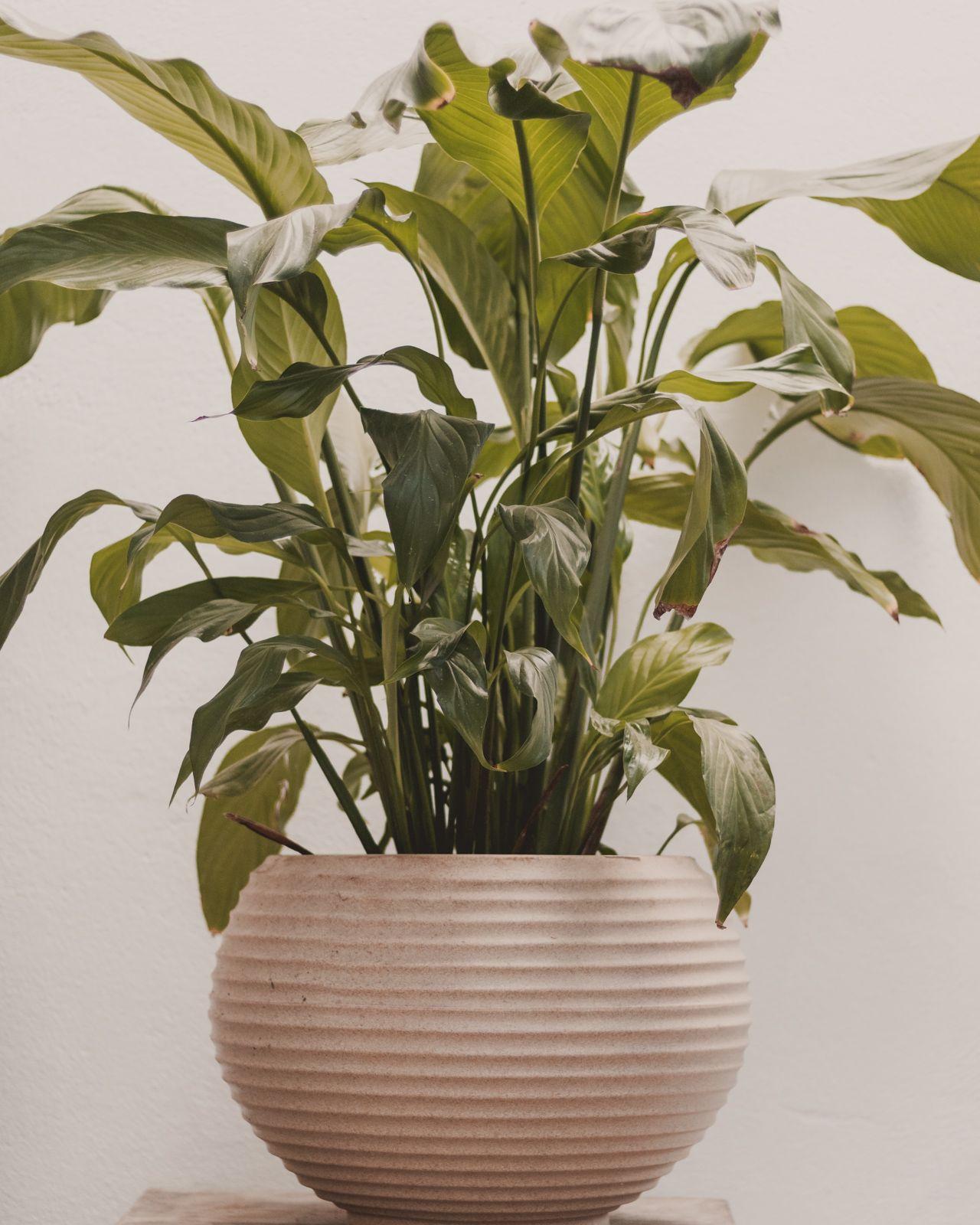 Adoradores de plantas | Houseplant jungle vaso planta