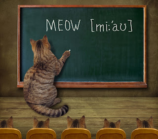 "Cat writes ""meow"" on a chalkboard"
