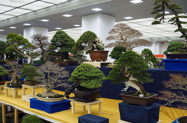 Bonsai on display at Taikan Ten Exhibition in Kyoto Japan