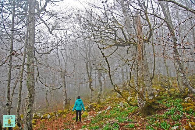 Reserva Natural de Mendilatz, Navarra