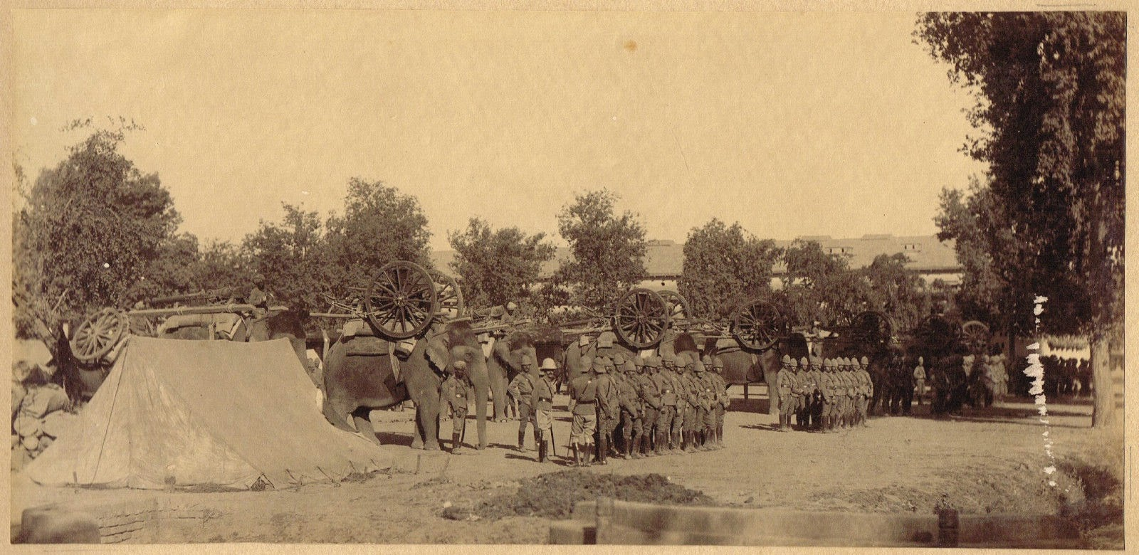 Military Elephant Battery in Peshawar - c1900