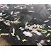 ခ်စ္သူမ်ားေန႔အမွတ္တရ သုံးစြဲျပီး ကြန္ဒုံးအခြံမ်ားစြာ လက္ေဆာင္ရခဲ႔တဲ႔ အင္းယားကန္