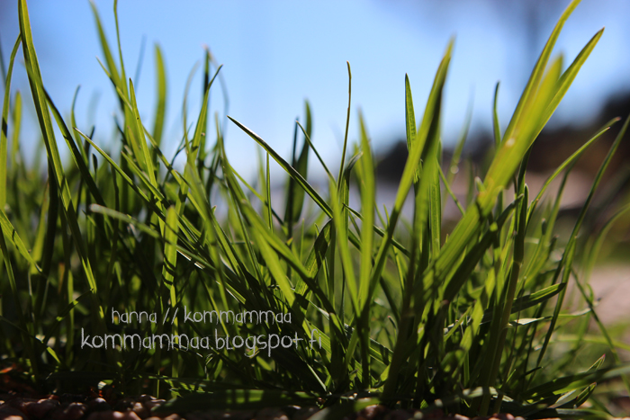 ruohonjuuri nurmikko korret