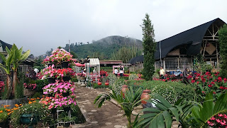Taman Begonia Lembang Bandung Jawa Barat