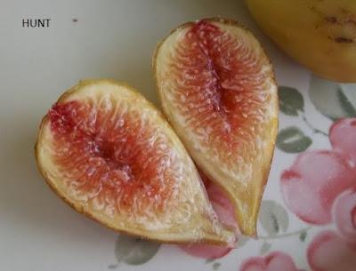 jual buah tin