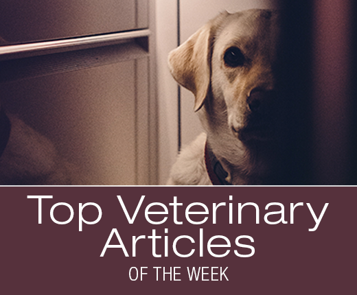Top Veterinary Articles of the Week: Noise Sensitivity and Pain, Hypertrophic Osteodystrophy, and more ...