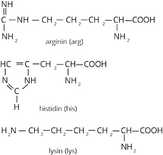 asam amino mengandung rantai samping yang mengandung gugus basa