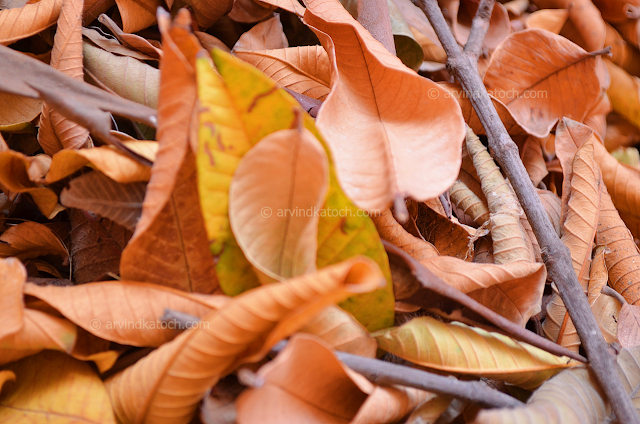 Dry, Fallen, Leaves, HD