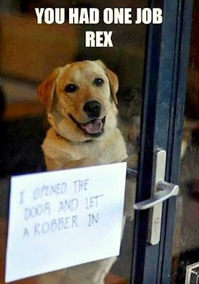 Funny Dog Shaming : Sorry i let in the robber
