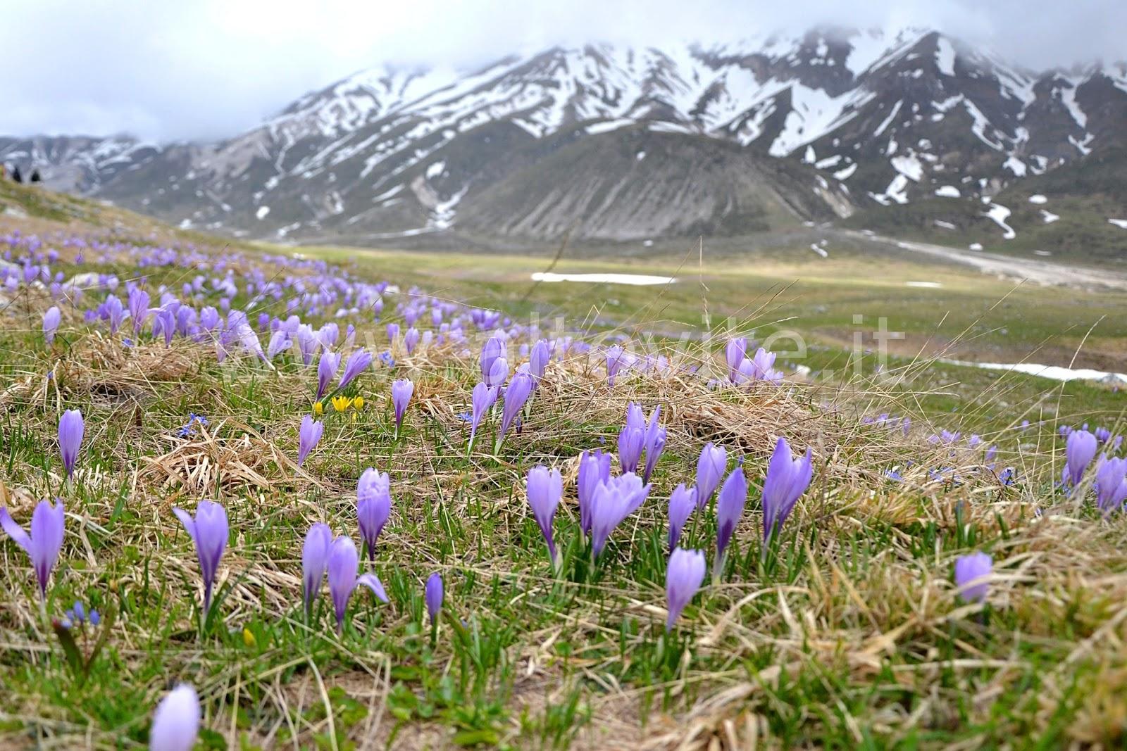 Fiori Da Giardino In Montagna giardino di montagna /2 | altevite