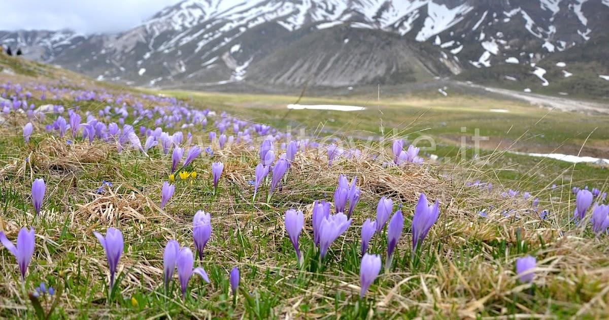 Giardino di montagna 2 altevite for Trasforma un semplice terreno in un colorato giardino