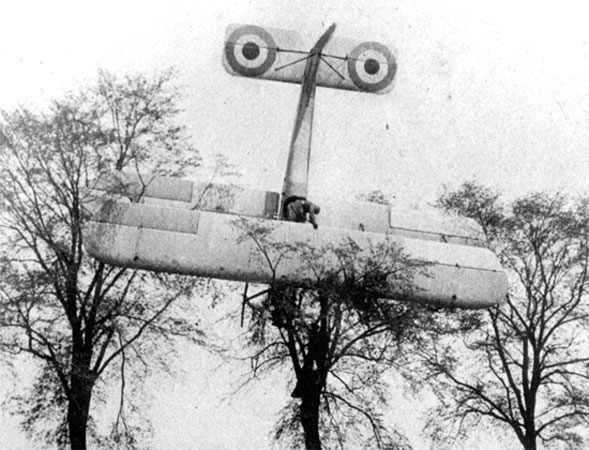 biplane on top a tree