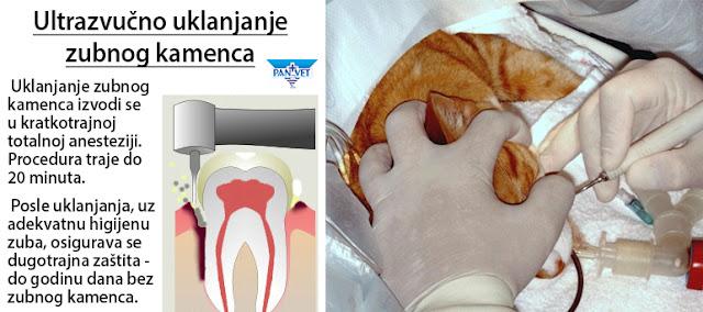 Ultrazvučno uklanjanje zubnog kamenca kod mačke