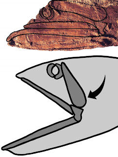 Extraordinary 'big-mouthed' fish from Cretaceous Period discovered