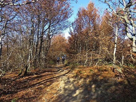Karłowaty las na przełęczy między Małą i Wielką Rawką.