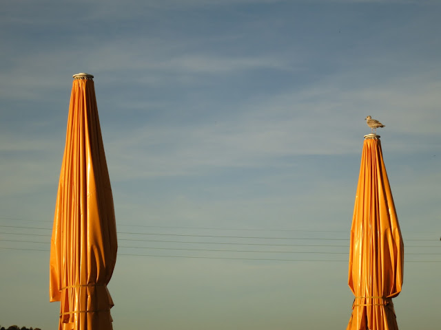 Two huge yellow umbrellas with a gull sitting on the top of one.