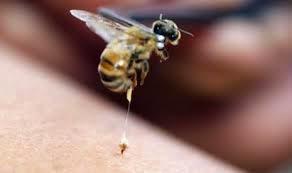 Racun Lebah Bisa jadi Obat HIV/AIDS
