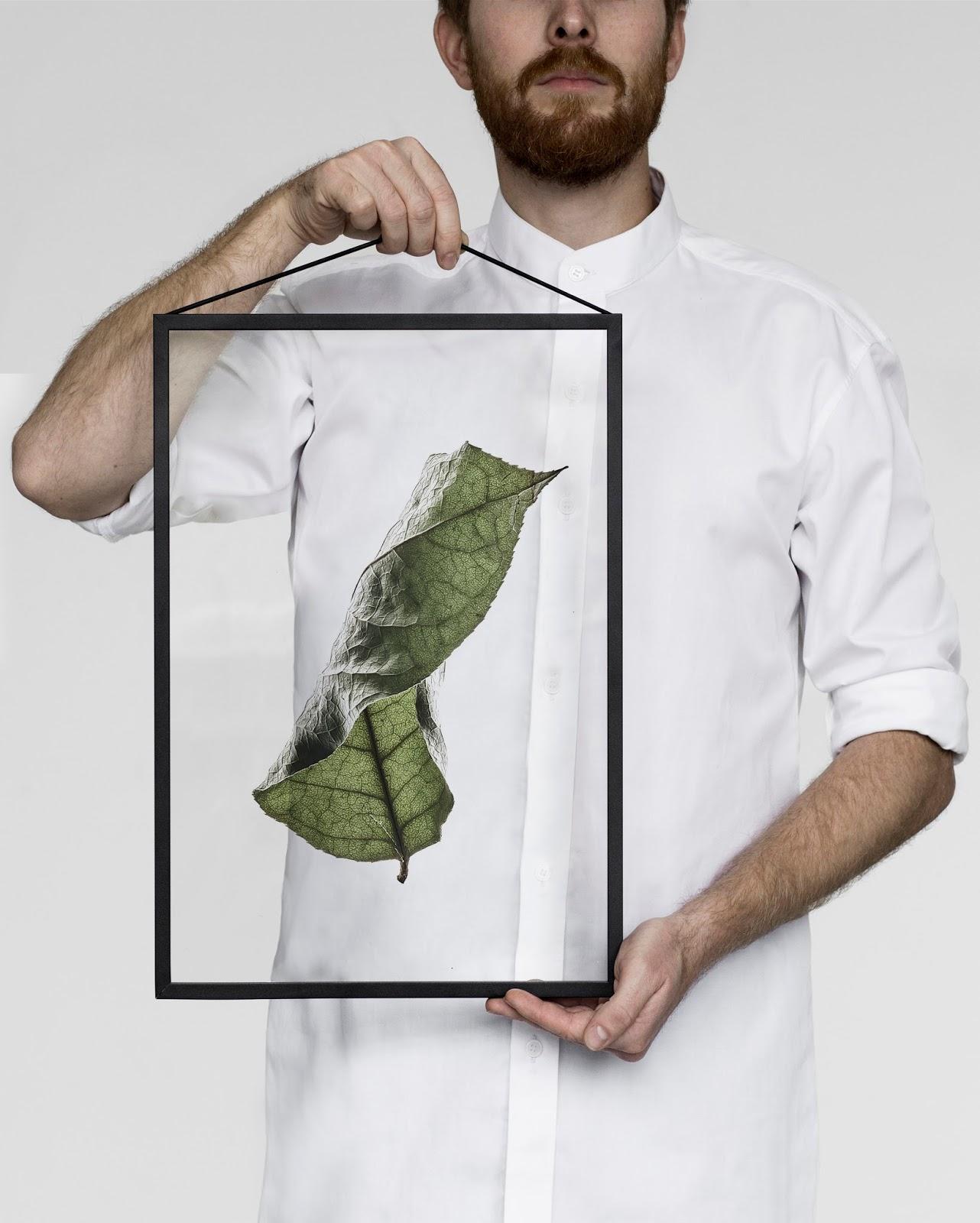 sprasowane liście roślin
