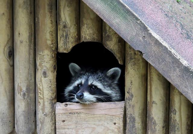 Ausflug Tierpark Gera