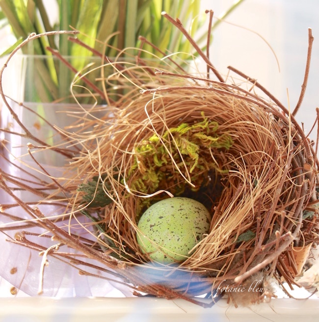 natural-grasses-and-twigs-birds-nest-with-green-egg