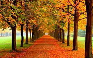 Resultado de imagen de arboles en otoño