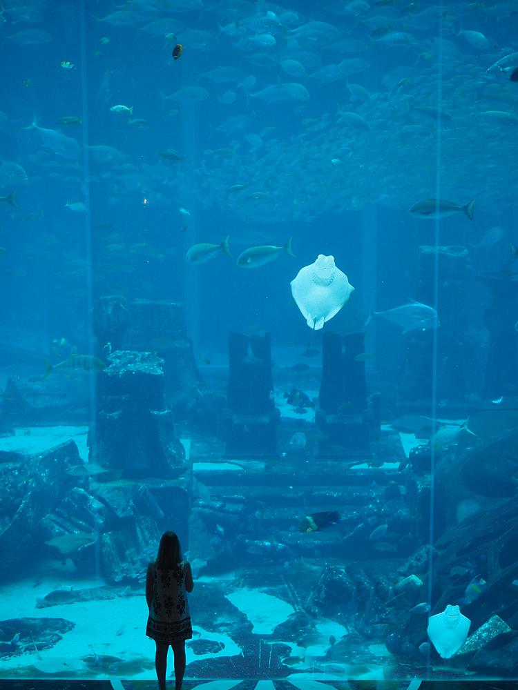 Underwater Restaurant Atlantis Travel | Afternoon Tea...