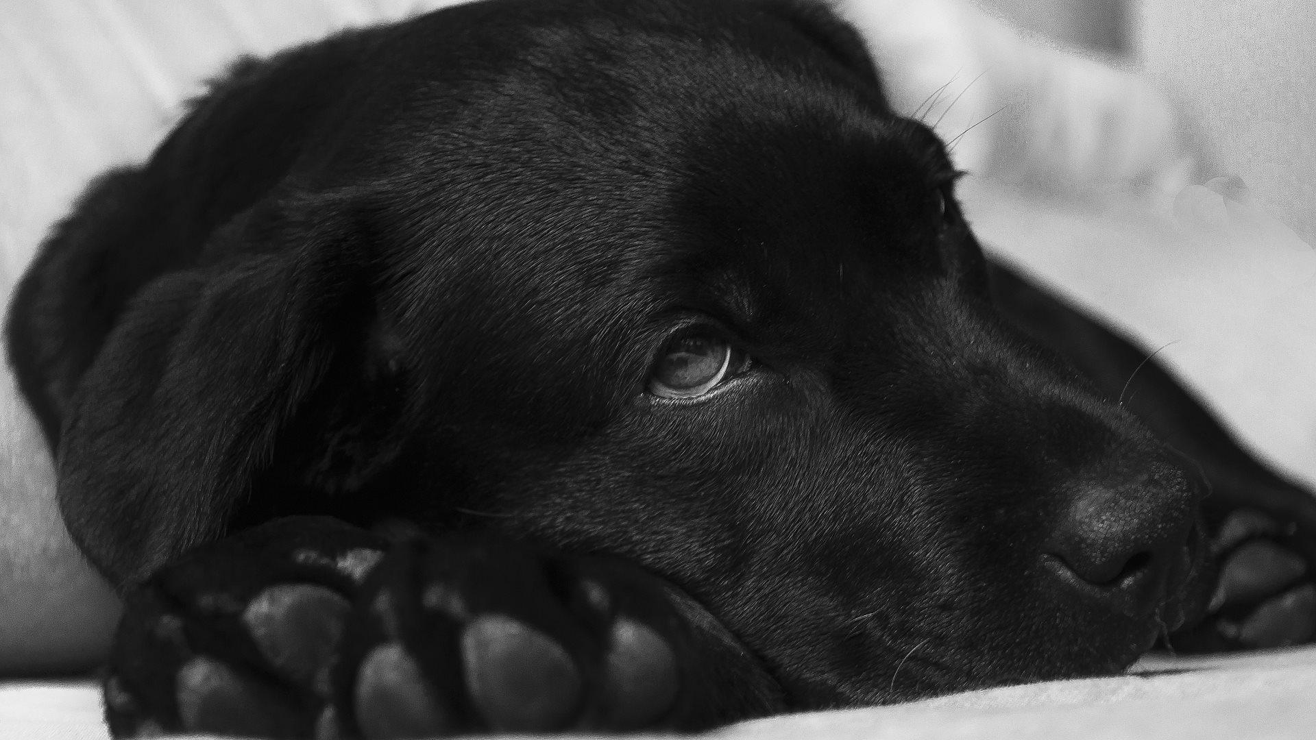 Dog-Loving Genius Creates Movie Scenes With A Beagle