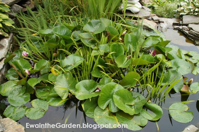 Best Plants Put Around Pond