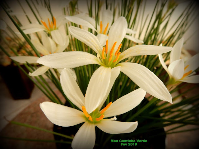 Flor Branca com 6 pétalas