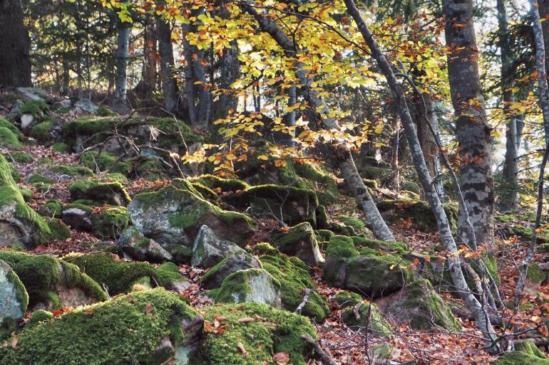 Forêt ardéchoise sous la lumière d'automne