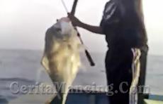Nikmatnya Mainin Slowjig Koika 60 Gram Dapat Ikan Monster