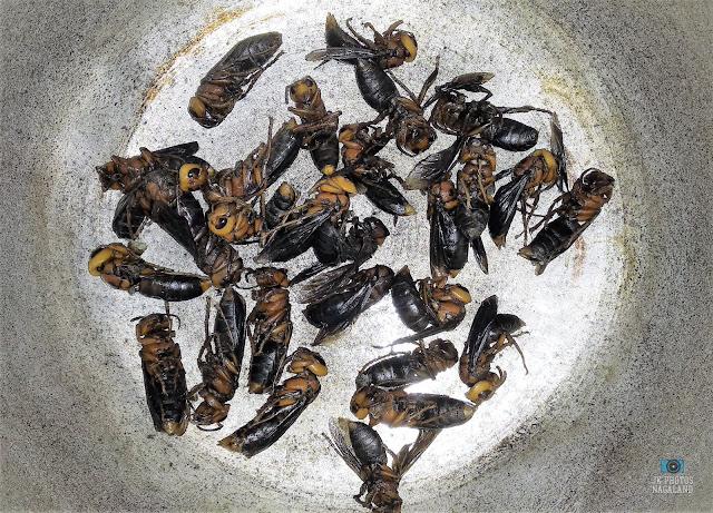 naga-food-items-hornet-wasps