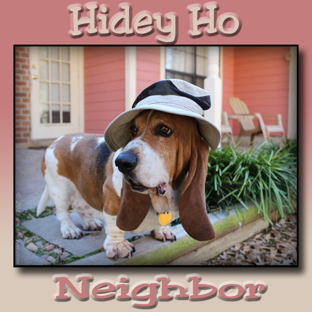 Bentley Basset in floppy hat with hidey ho neighbor meme