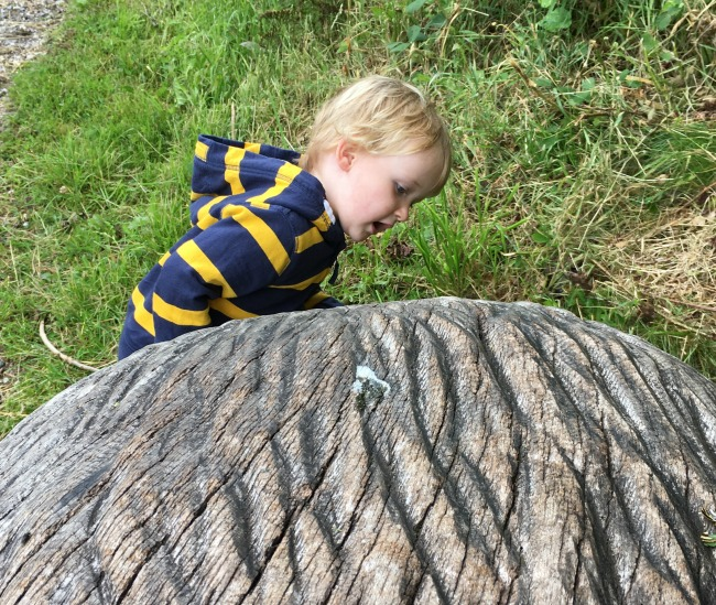 Garwnant-Visitor-Centre-A-Toddler-Explores-toddler-by-big-carved-wooden-thing-its-a-hedgehog-but-shh-don't-tell-anyone