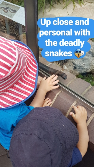 Sydney with toddlers: taronga zoo red bellied black snake behind glass