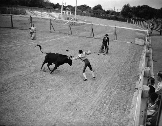 bloodless bullfight, 15 July 1941 worldwartwo.filminspector.com