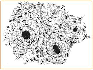 Fungsi Jaringan Hewan dan Struktur tubuhnya