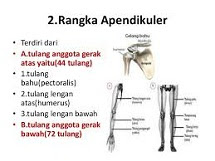 Rangka Apendikular pada Tubuh Manusia - berbagaireviews.com