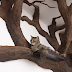 Man Created An Incredible Indoor Fake Tree For His Majestic Cat