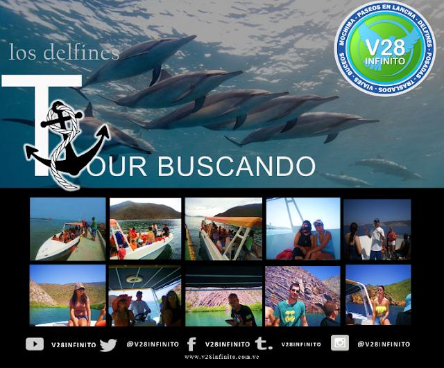 imagen tour delfines