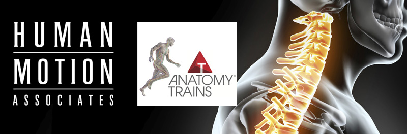 Art Of Motion Circle Of Friends Anatomy Trains Tom Myers Fall