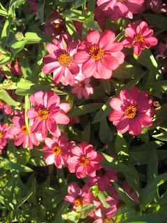 Portsmouth, NH display garden