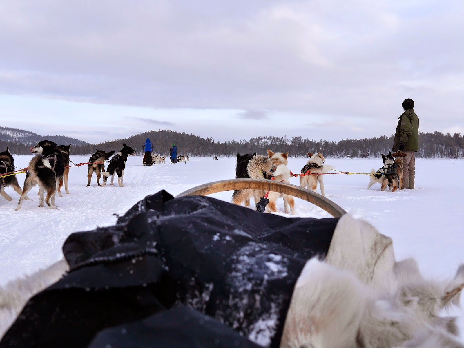 Husky Dog Sledding in the Finnish Lapland