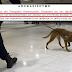 NAI! Με σκύλους θα ψάχνουν για μετρητά στα αεροδρόμια...