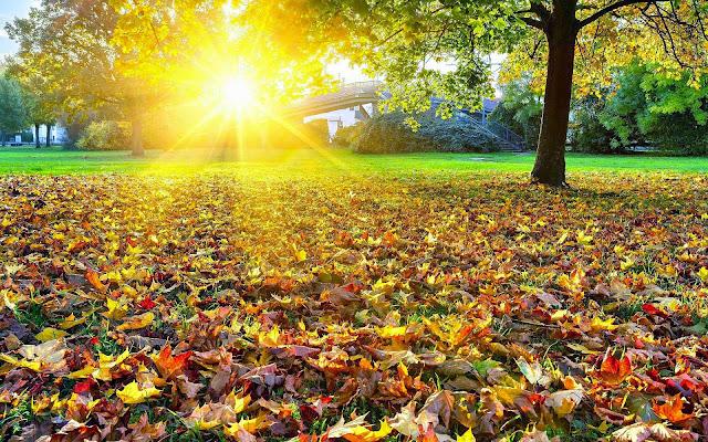 Boom in park in de herfst
